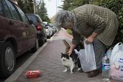 Azime İplikçi her gün 3 saat yürüyüp kedileri besliyor