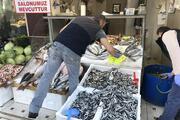Hamsi 5 liraya kadar düştü minekop balığı tezgahları süsledi