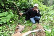 Yaylada, hayvanları telef eden kurtlara karşı tüfekli nöbet