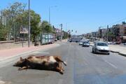 Antalya'da şok görüntü TIRdan caddeye döküldü...