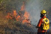 Amazon Ormanları haftalardır yanıyor