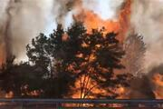 Tekirdağ'da yazlıkçıları korkutan yangın