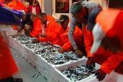 Av yasağı bitti balıkçılar denize açıldı