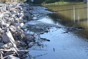 Bursada balık ölümleri devam ediyor