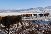 Ardahanda Aktaş Gölünün yüzeyi buz tuttu