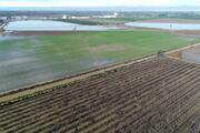 Adana'da tarım arazileri su altında