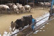 Hırsızlar sebep oldu Türkiyenin en verimli tarım arazisi sular altında…