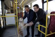 Üşüyüp otobüse binen köpek yolcularla şehir turu attı