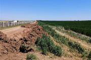 Tekirdağa kaçak gelenler araçlarıyla geçtikleri tarlalara zarar verdi
