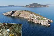 Marmara Denizi ekosisteminde gırgır tehlikesi