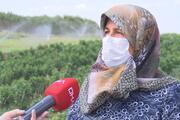 İstanbulda taze ve organik ürün için tarlalara akın