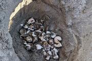 Marmarada yumurtadan çıkan yavruların bulunduğu caretta caretta yuvası tespit edildi