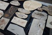 Hepsi Adnan Oktar'ın evinden çıktı Milyon dolarlık fosiller...