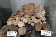 Kolye yapmak için dağ-tepe dolaşıp taş ararken 550 milyon yıllık fosiller buldu