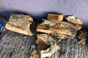 Edirnede 8 milyon yıllık mamut fosilleri bulundu