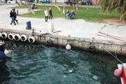 İstanbul Boğazını denizanaları bastı