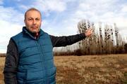 Profesörden karga istilası açıklaması: Güvenlik için kavak ağacına gelirler