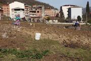 Trabzonda drakula tehlikesi giderek büyüyor Ağaçlar yakılıyor