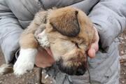Ankarada sokak köpekleri dağlık alanda ölüme terk edildi iddiası