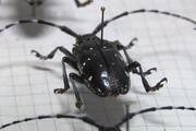 İstanbulun ağaçlarında teke böceği tehlikesi... 2 ayda 180 ağaç kesildi