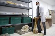 Kayseride 8 milyon yıl önce 5 farklı fil türü bir arada yaşamış