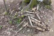 Belgrad Ormanındaki devasa çukur şaşkına çevirdi