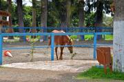 İBBnin Dörtyol Belediyesi'ne hibe ettiği kayıp atlar olayında yeni detaylar