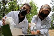 Zonguldakta katil arılara karşı böcekler doğaya salındı