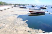 Marmarada deniz salyası tehlikesi