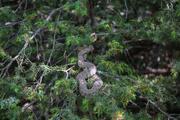Tuncelide vatandaşlara engerek yılanı uyarısı