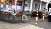 Aç kalınca süpermarkete dalan yaban domuzu sosyal medyanın gündemi oldu