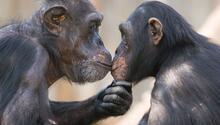 Eşine sözünü tuttu: Hayvanat bahçesine 750 bin euro bağışladı