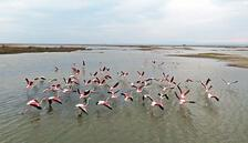 Flamingolar Gala'ya geldi