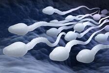 Sperm sayısı neden düşer?