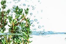 Kekik suyu neye iyi gelir, nasıl kullanılır? İşte, kekik suyu faydaları ve zararları