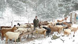 Çobanları Kazdağlarından kar da indiremiyor