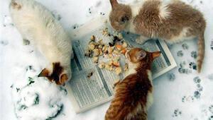 Kedi köpek dostlarımız için meydan okuyoruz
