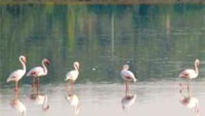 Kelaynak, flamingo, çöl varanı görmek isteyenlere doğa turları