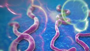 Ebola kontrolden çıktı: 728 ölü