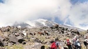 Ağrı Dağı'nın yaz ziyaretçileri