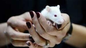 İhracat kalemlerine fareyi ekledi