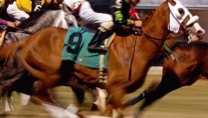 At yarışında Başbakanlık Kupası heyecanı