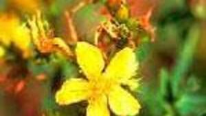 Şifalı bitkiyle körlüğe çare