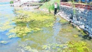 Mogan'da su 20 santimetre düştü