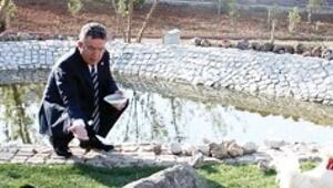 Özcan'ın horozunu Facebook'tan kaptı