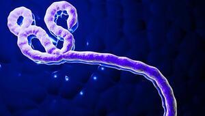 KKTC'de Ebolasız virüs paniği