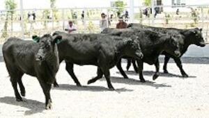Et ihalesinde 16.7 milyon dolarla yine Ürdünlü öne çıktı