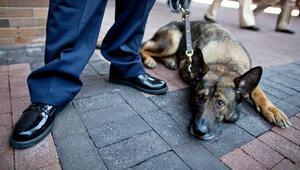 New York polis sayısını azaltıp, köpek sayısını artırdı