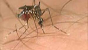 Batı Nil virüsü paniği