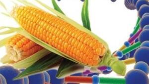 TGDF 29 gen için başvurdu, GDO'lu gıda ithalatı için kapı açılıyor